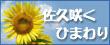 関連サイト:佐久咲くひまわり